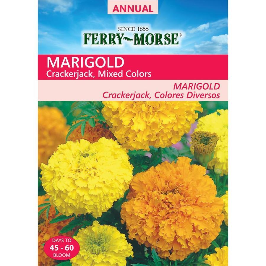 Ferry-Morse 450-Milligrams Marigold Seeds (L0000)