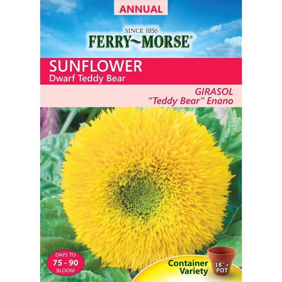 Ferry-Morse 1.5-Grams Sunflower Seeds (L0000)