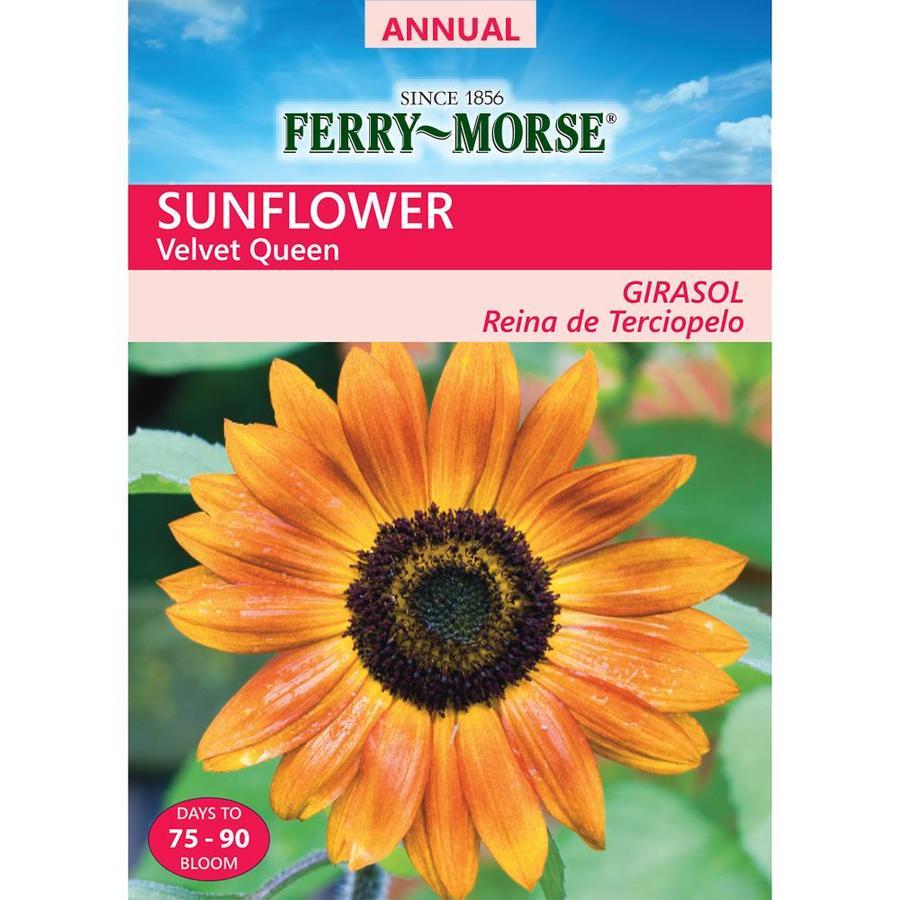 Ferry-Morse 650-Milligrams Sunflower Seeds (L0000)