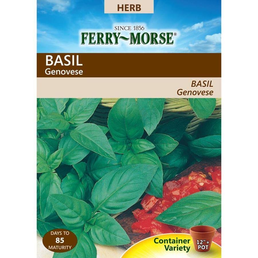 Ferry-Morse 300-mg Basil Genovese (L0000)