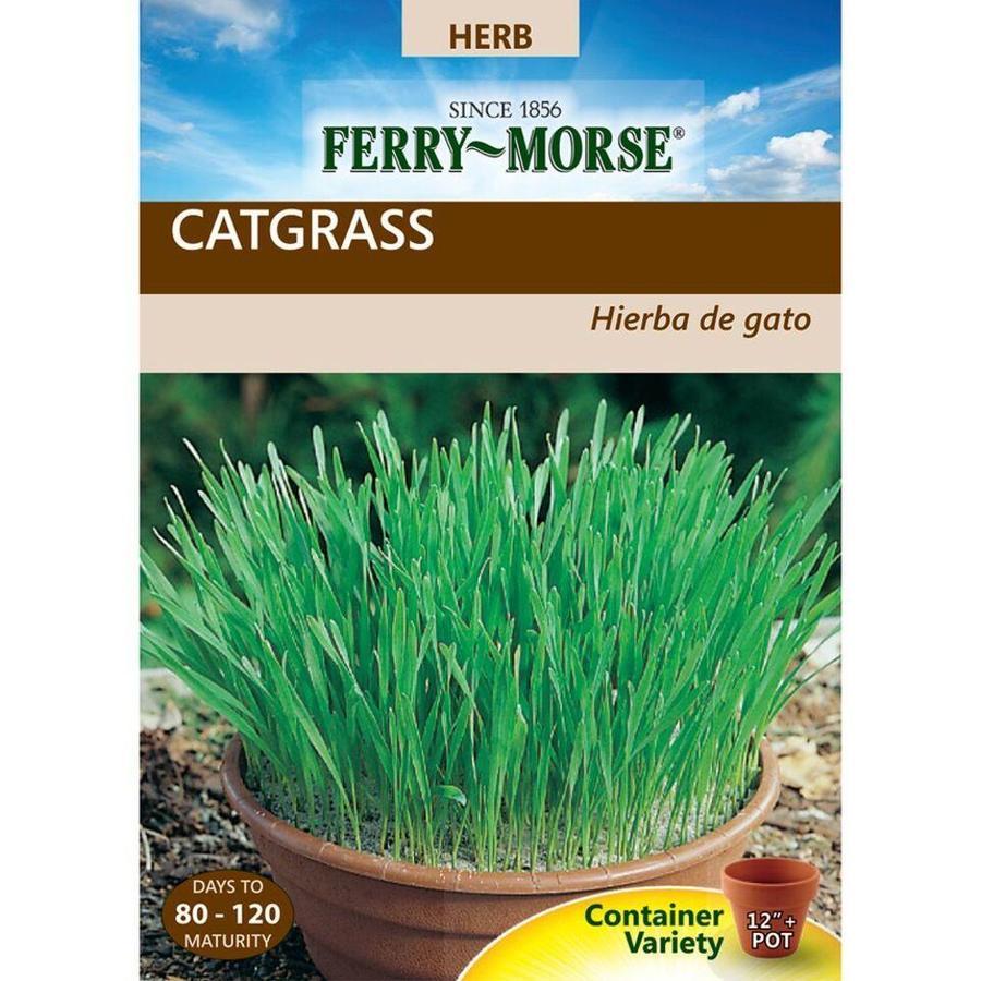Ferry-Morse 3-Gram Catgrass (L0000)