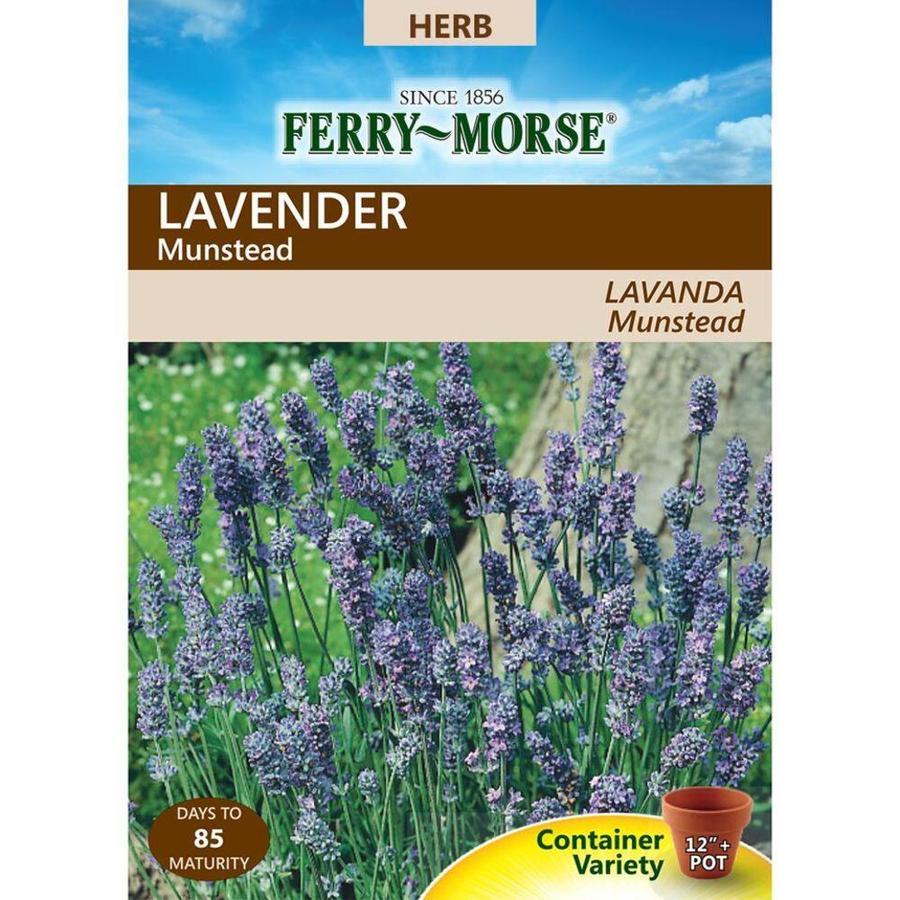 Ferry-Morse 250-mg Lavender Dwarf Munstead (L0000)