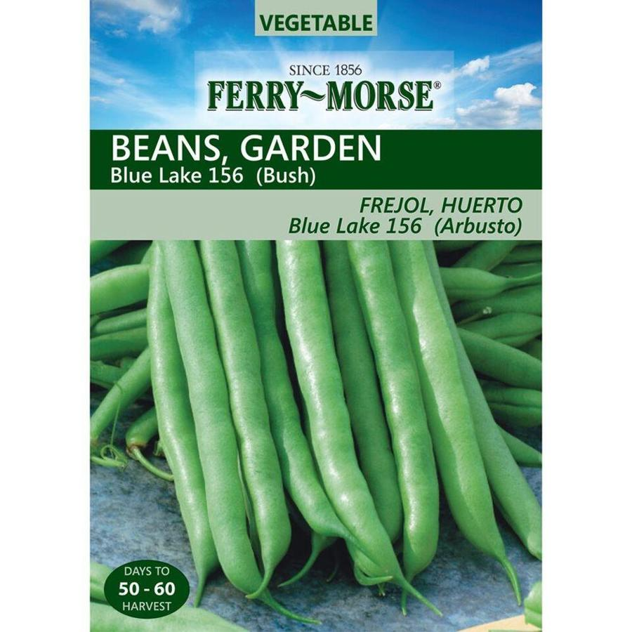Ferry-Morse 14 Gram(S) Bean Blue Lake 156 Bush (L0000)
