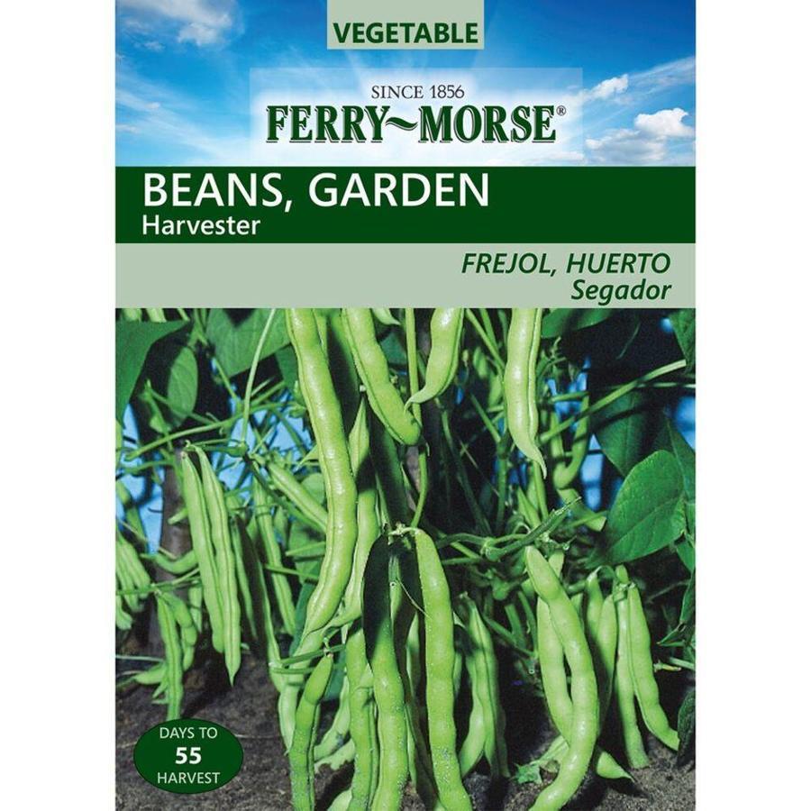 Ferry-Morse 21 Gram(S) Bean Harvester (L0000)