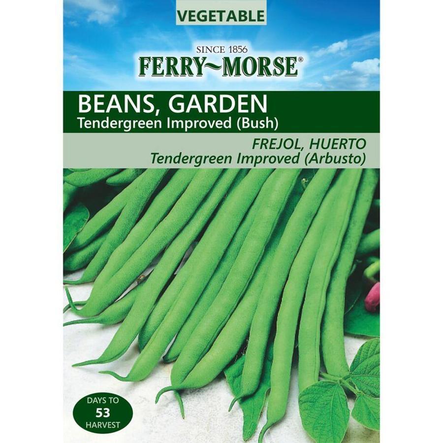 Ferry-Morse 18 Gram(S) Bean Tendergreen Improved Bush (L0000)