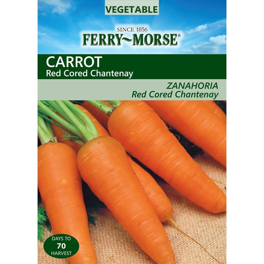 Ferry-Morse 2.25-Grams Carrot Red Cored Chantenay (L0000)