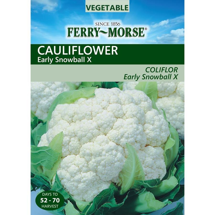 Ferry-Morse 600-mg Cauliflower Early Snowball X (L0000)