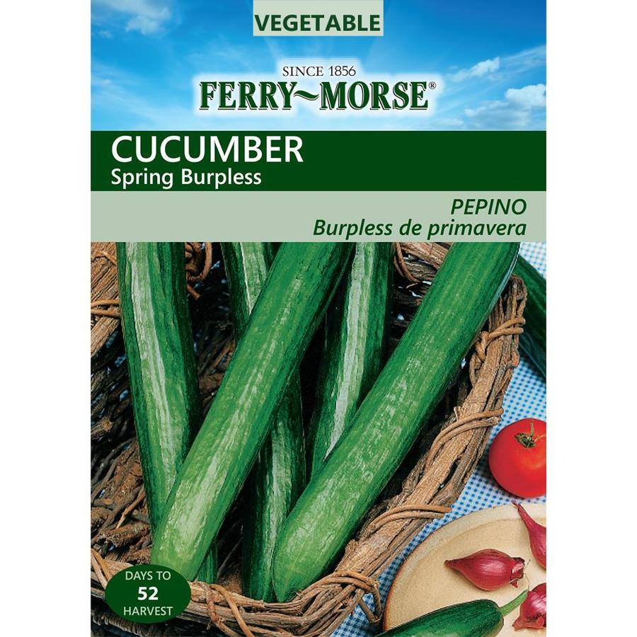 Ferry-Morse 1.4-Grams Cucumber Spring Burpless (L0000)