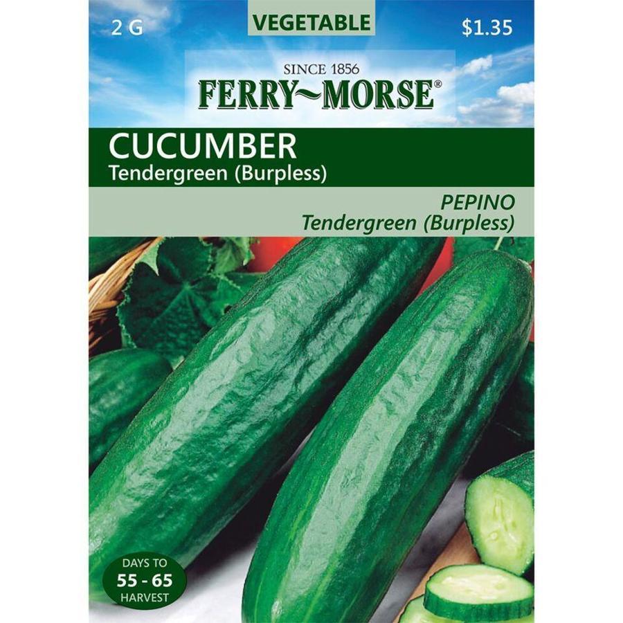 Ferry-Morse Cucumber Tendergreen Burpless