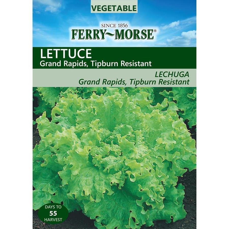 Ferry-Morse Lettuce Grand Rapids Tipburn Resistant