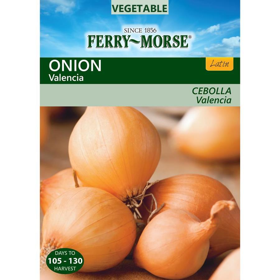 Ferry-Morse 500-mg Onion Valencia (L0000)