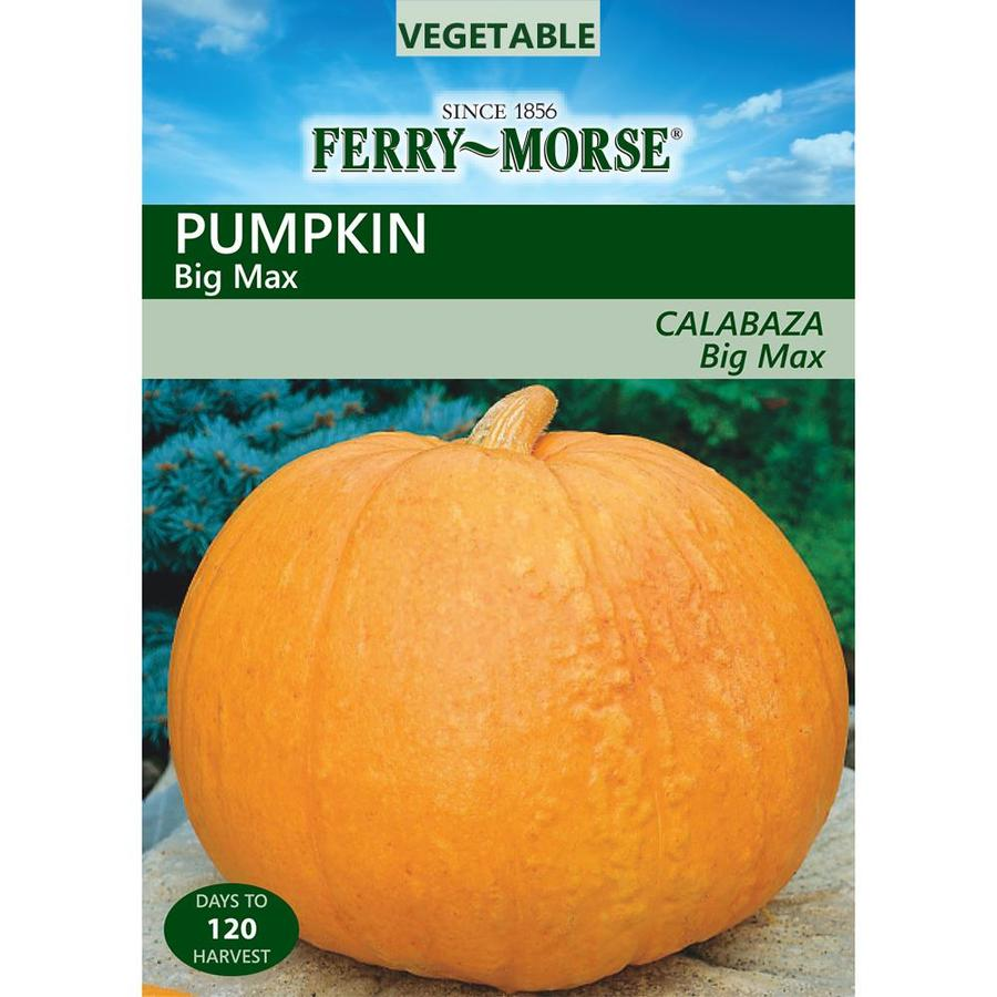 Ferry-Morse 4.8-Grams Pumpkin Big Max (L0000)