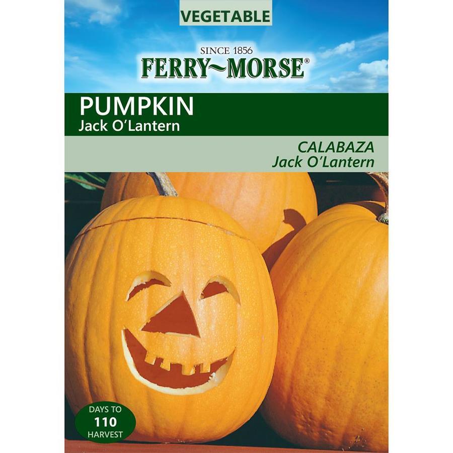 Ferry-Morse 4.7-Grams Pumpkin Jack O'Lantern (L0000)