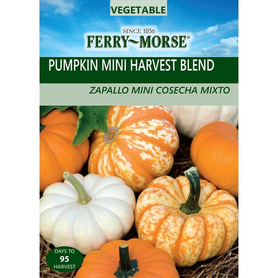 Ferry-Morse 2-Grams Pumpkin Mini Harvest Blend (L0000)