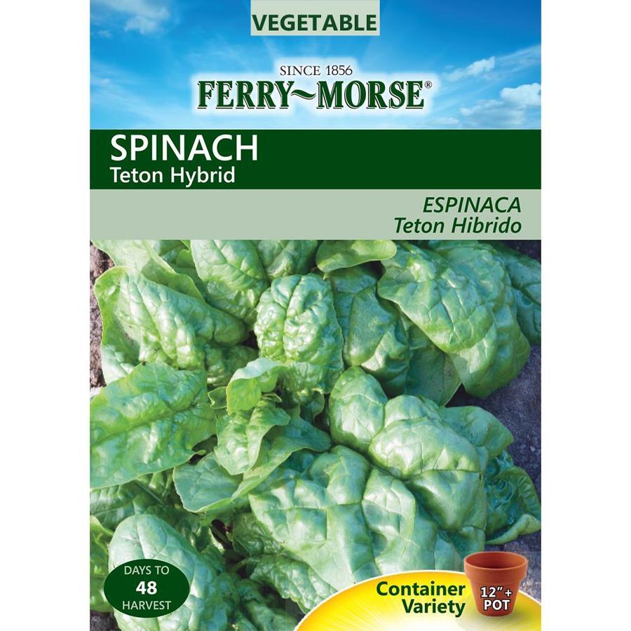 Ferry-Morse 2-Grams Spinach Teton Hybrid (L0000)