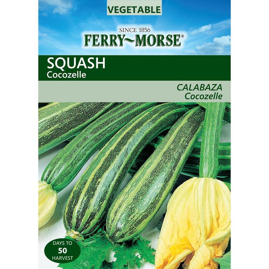 Ferry-Morse 4-Grams Squash Cocozelle (L0000)