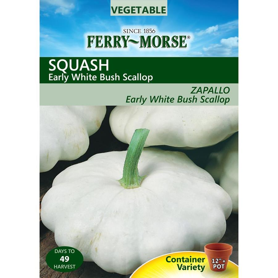 Ferry-Morse 4.5-Grams Squash Early White Bush Scallop (L0000)