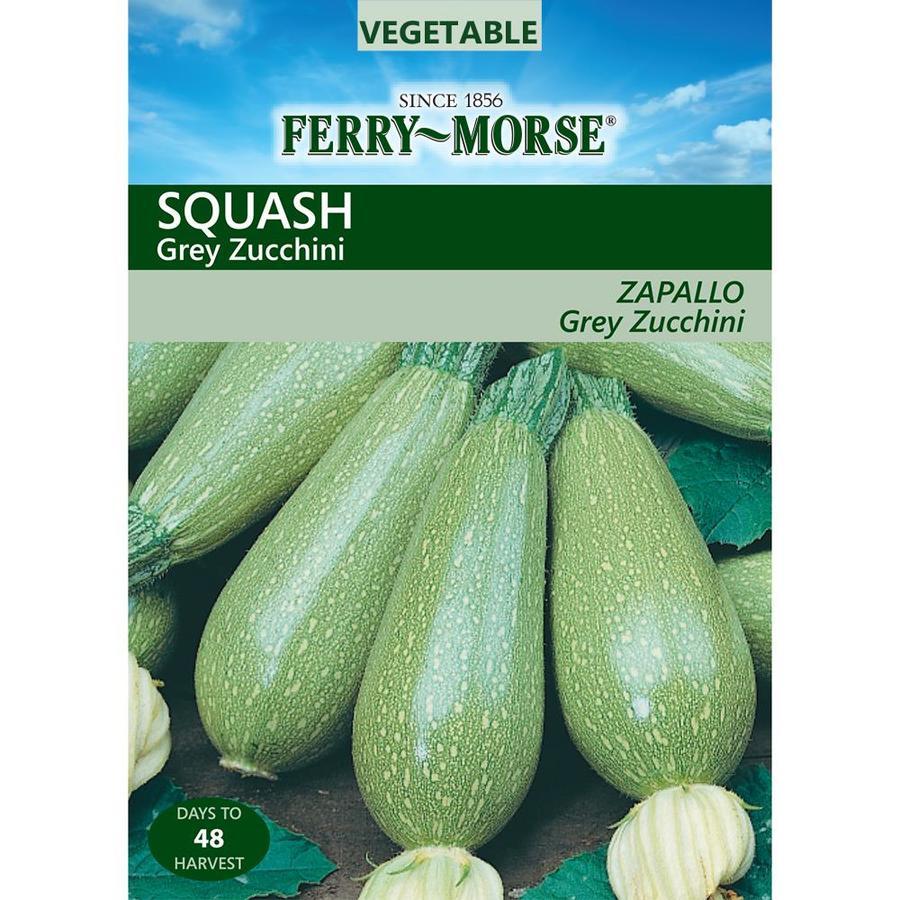 Ferry-Morse 4-Grams Squash Grey Zucchini (L0000)