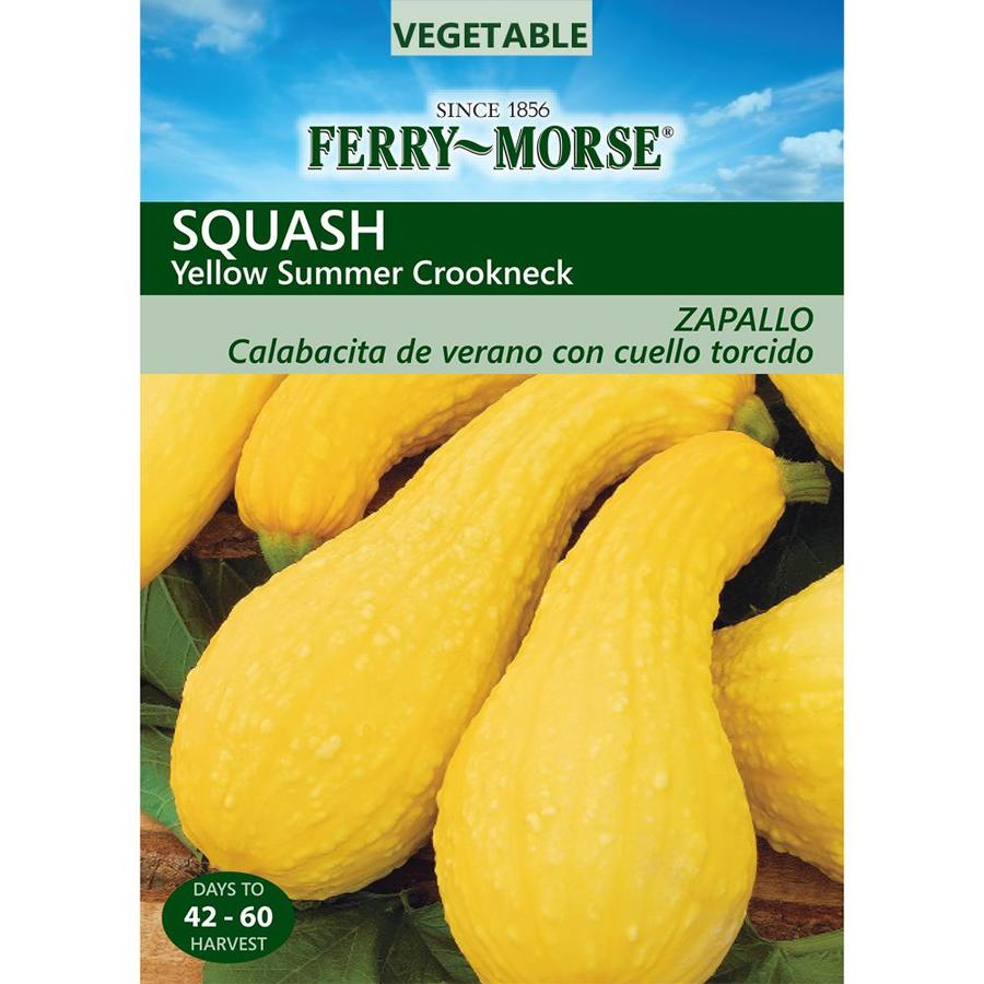 Ferry-Morse 4.5-Grams Squash Yellow Summer Crookneck (L0000)