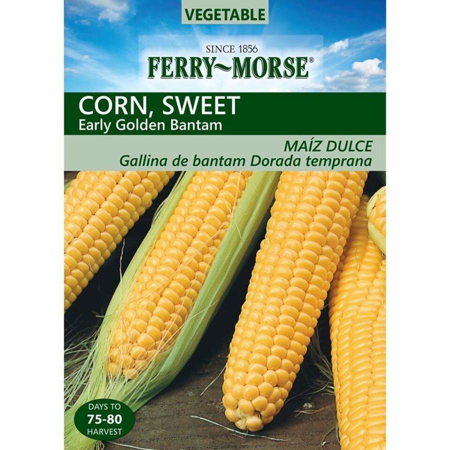 Ferry-Morse 14 Gram(S) Sweet Corn Early Goden Bantam (L0000)
