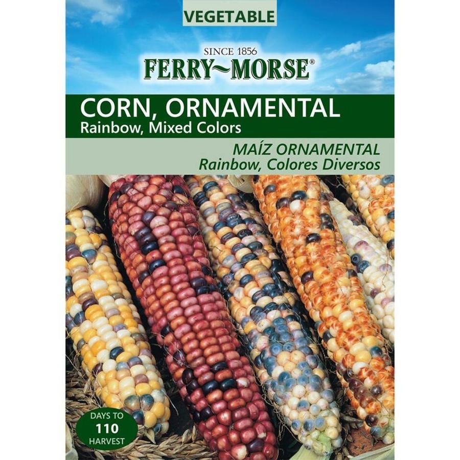 Ferry-Morse 10 Gram(S) Ornamental Corn Rainbow Mixed Colors (L0000)
