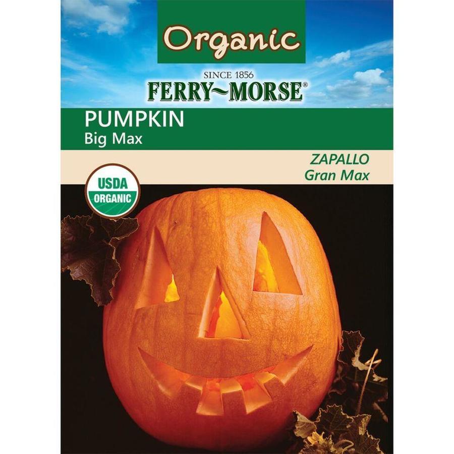 Ferry-Morse 3-Grams Organic Pumpkin Big Max (L0000)