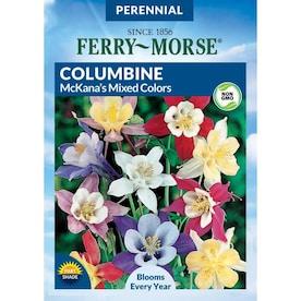 50116 Sps Stylomecon Heterophyllum Seed Feuermohn Copper Queen Flower
