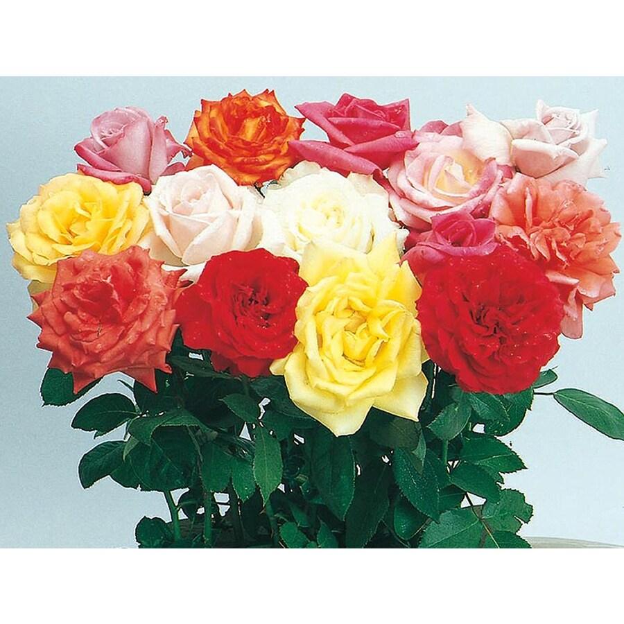 3-Quart Miniature Rose (L5965)