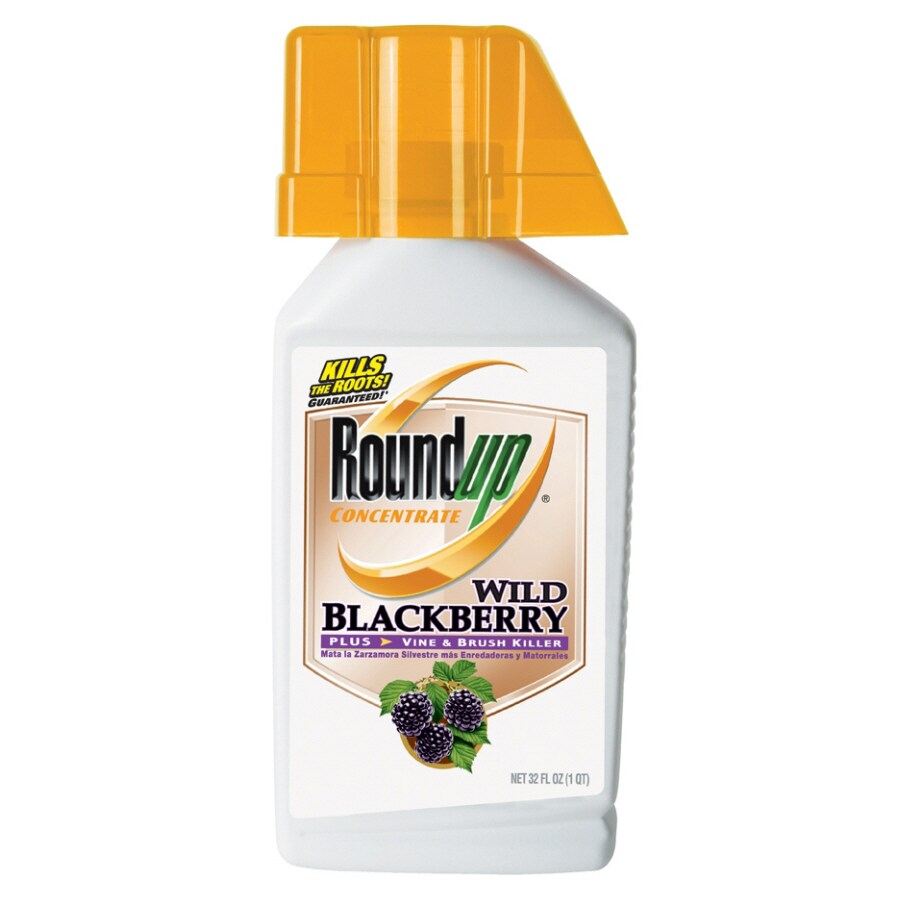 Roundup 32 Oz Concentrate Vine And Brush Killer At Lowescom