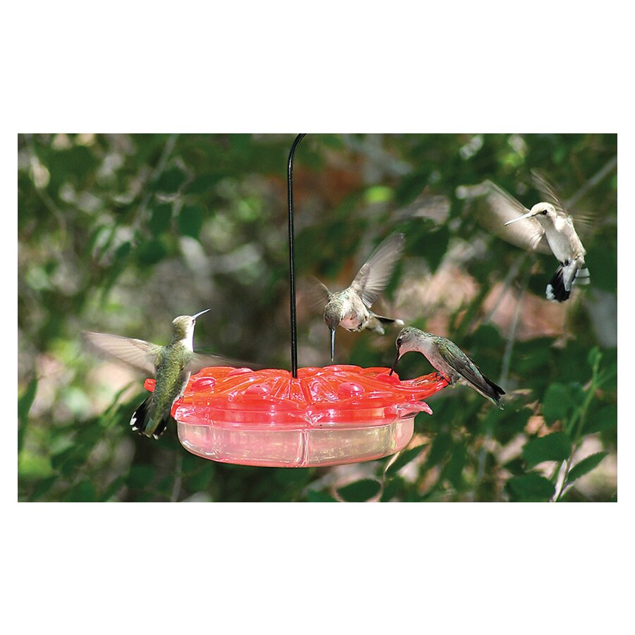 Captivating Homestead Petunia Hummingbird Feeder