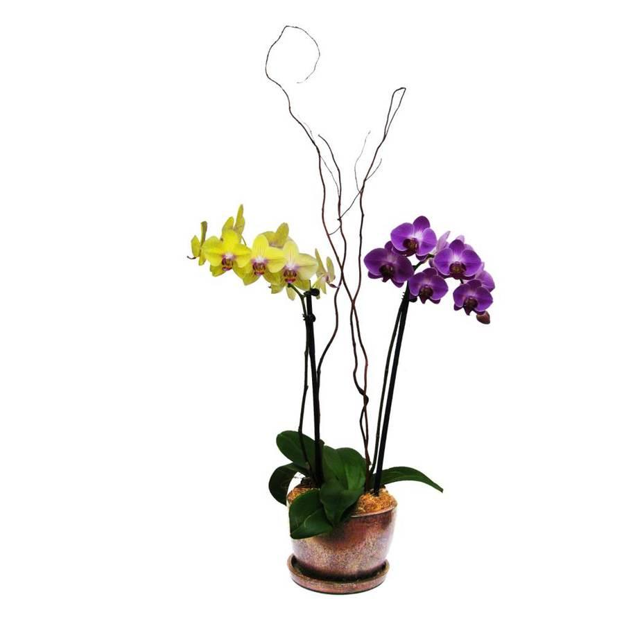 BETTER-GRO 1-Gallon Phalaenopsis Planter