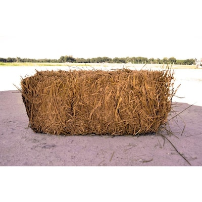 Wheat Straw At Lowes