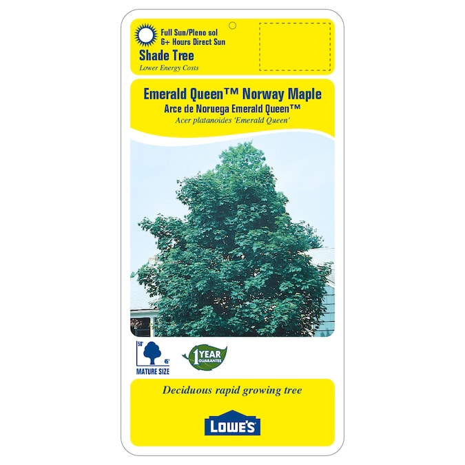 Emerald Queen Maple Fall Color: 8.9-Gallon Yellow Emerald Queen Norway Maple Shade Tree In