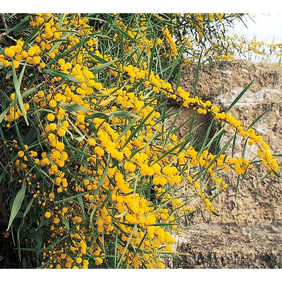 3.25-Gallon Water Wattle Feature Tree (L14868)