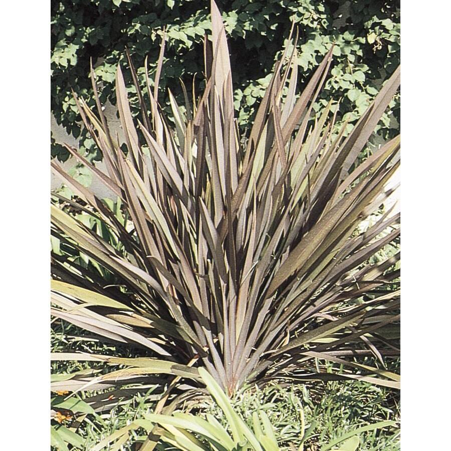 2.92-Quart New Zealand Flax (L11837)
