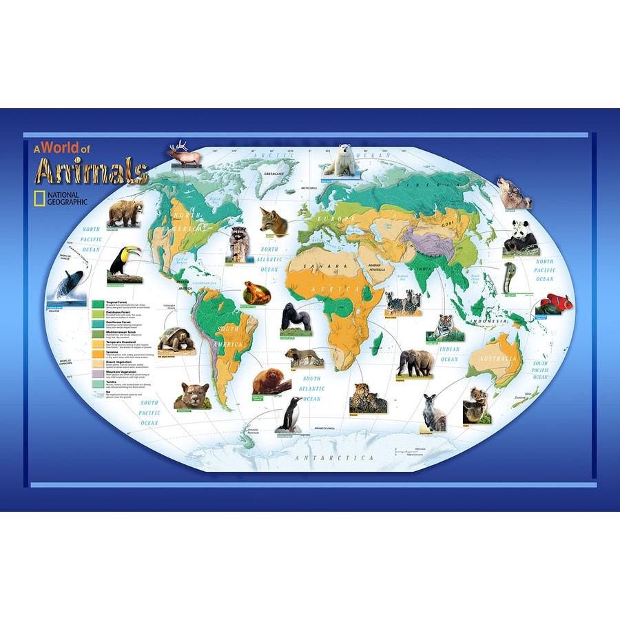 Brewster Wallcovering National Geographic Animals Mural