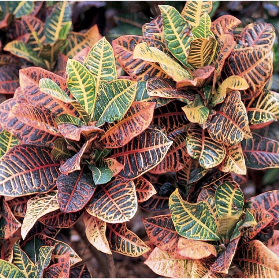 3.5-Quart Croton (L5448)