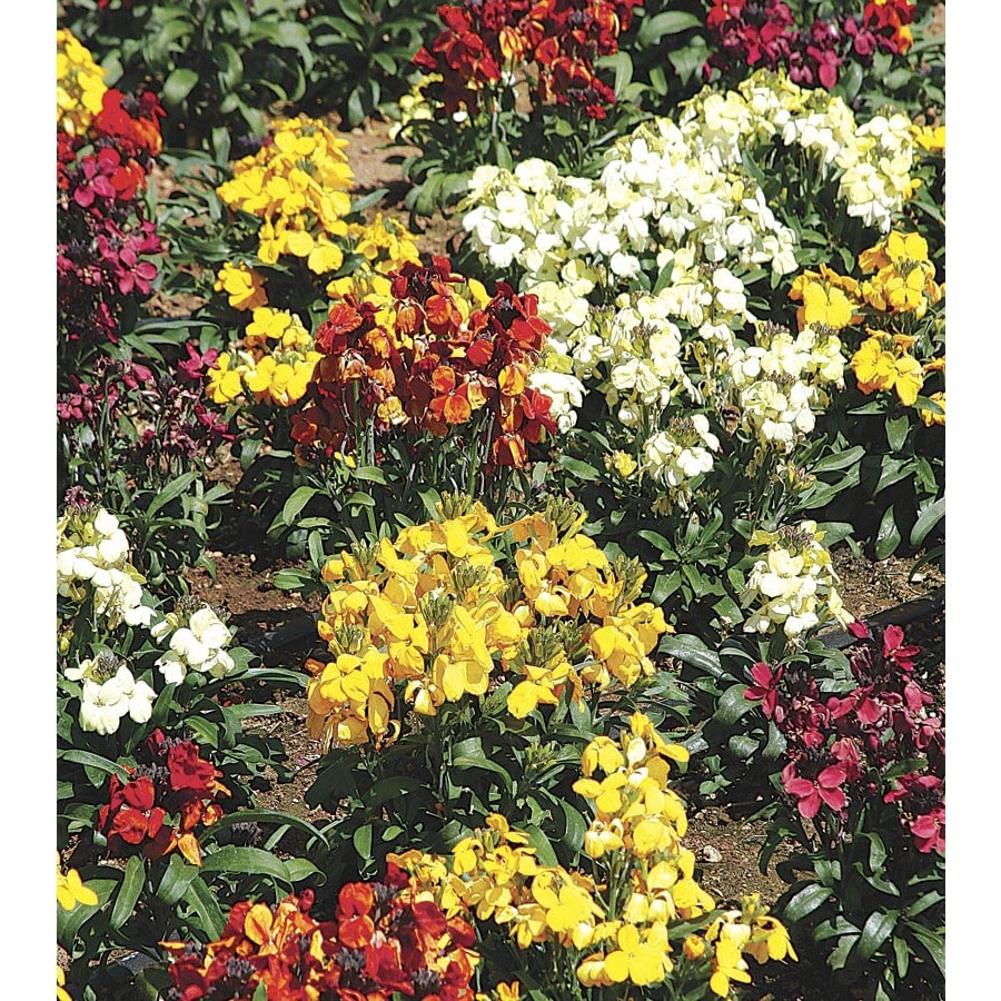 3.43-Gallon Wallflower (Lw04008)