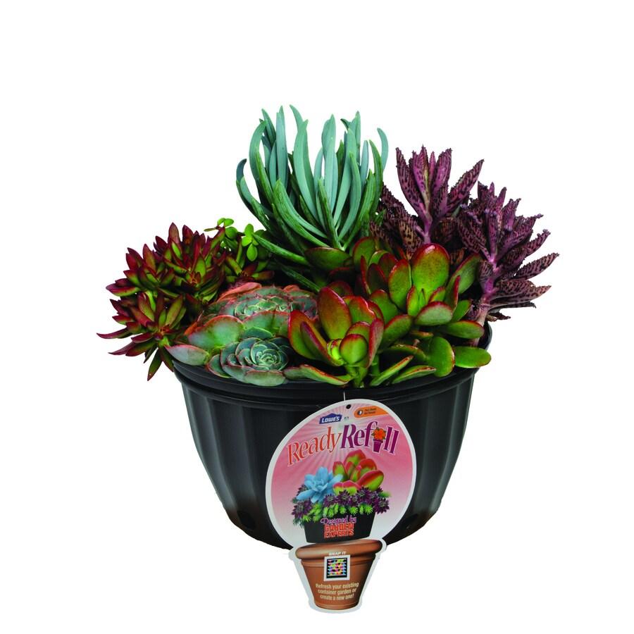 1.5-Gallon Assorted Succulents (L24880)