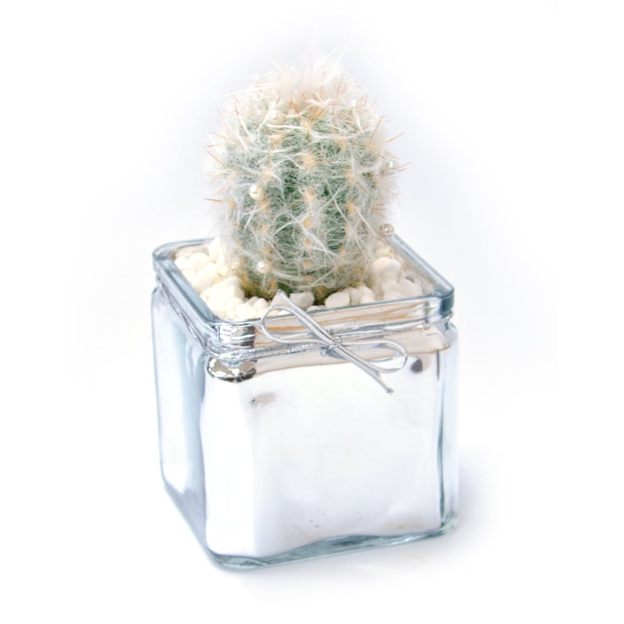 1.3-Pint Mixed Cacti (AL001)