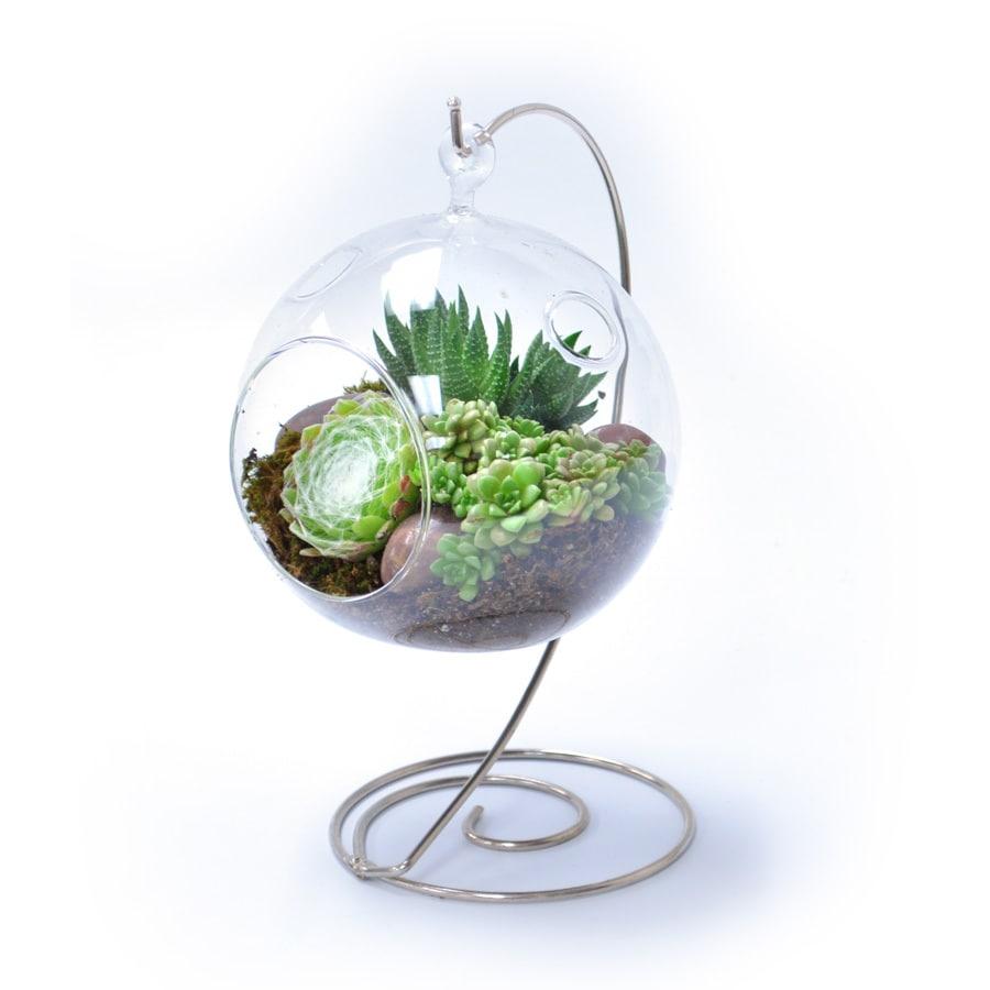 3-oz Mixed Cacti (AL001)
