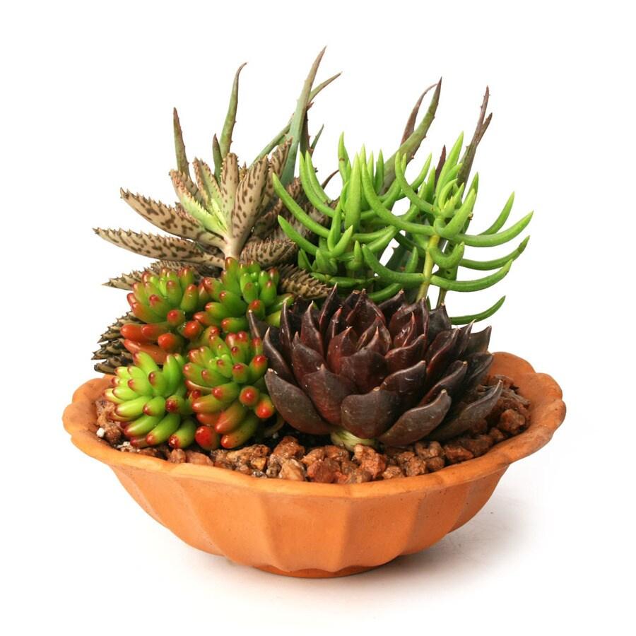 1-Pint Mixed Cacti (AL001)