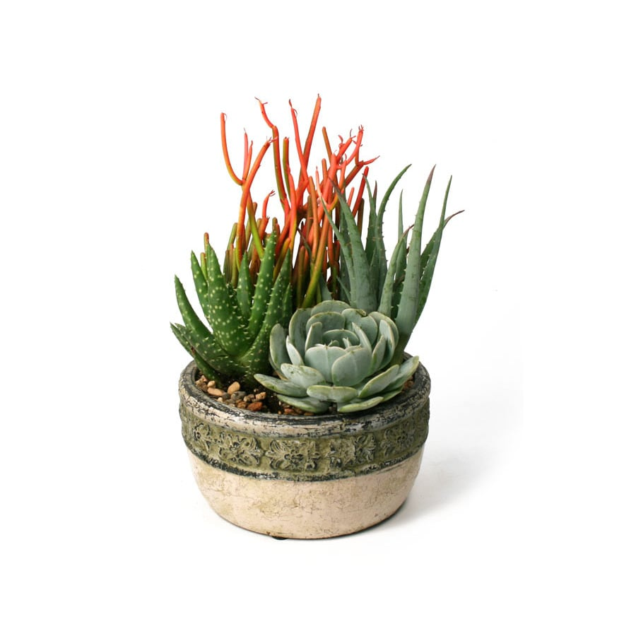 1.4-Quart Mixed Cacti (AL001)
