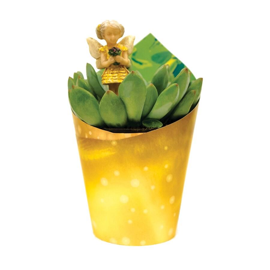 4-oz Mixed Succulents