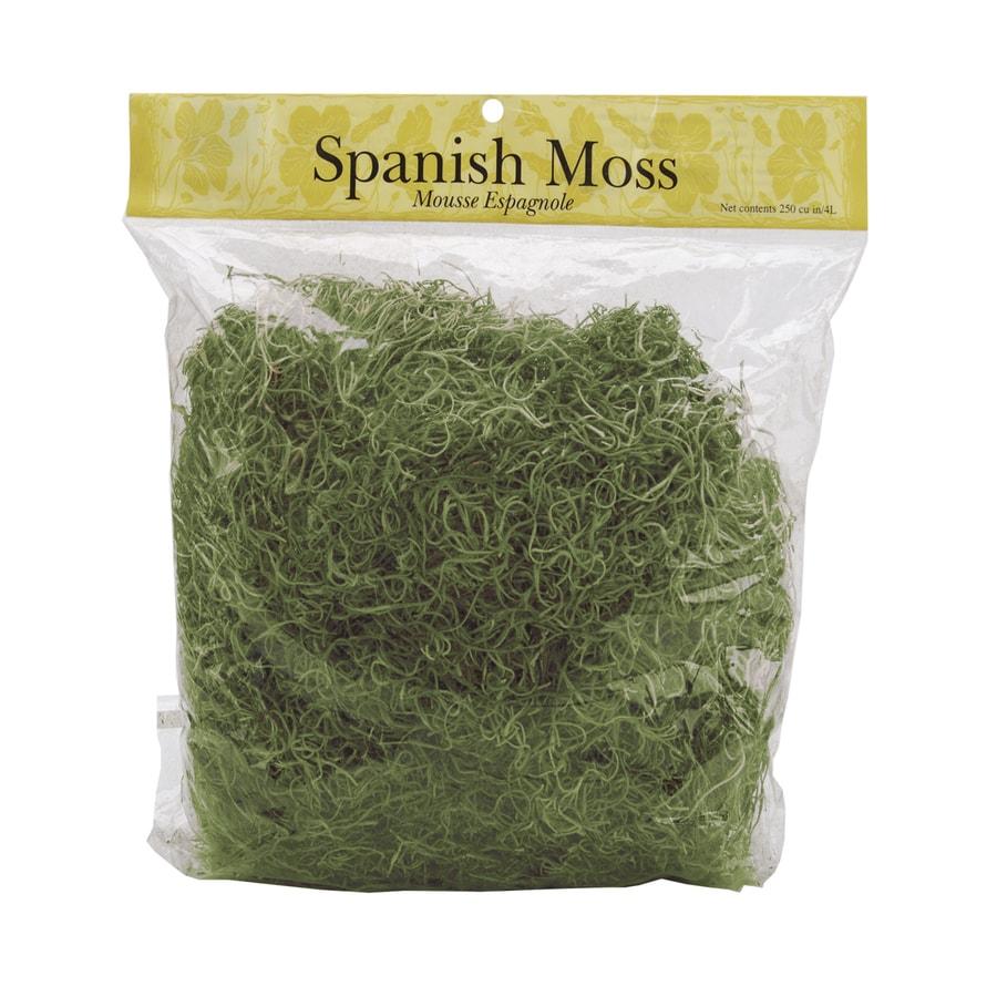 250-cu in Spanish Moss