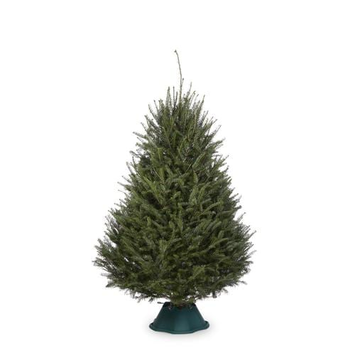 Real Christmas Trees Lowes