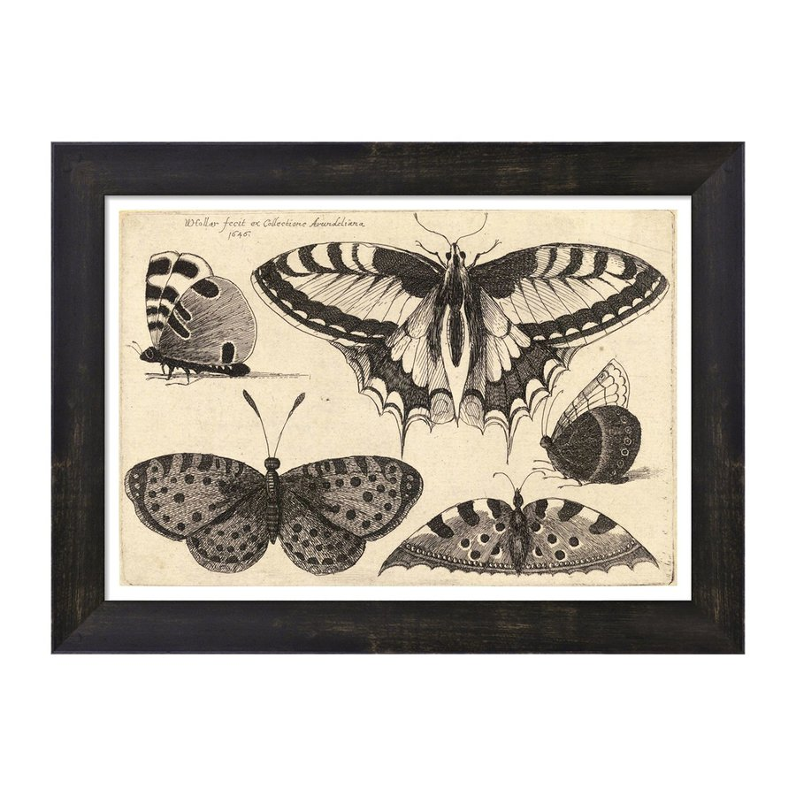 EVIVE DESIGNS 18-in W x 14-in H Framed Paper Vintage Butterfly III Print Wall Art