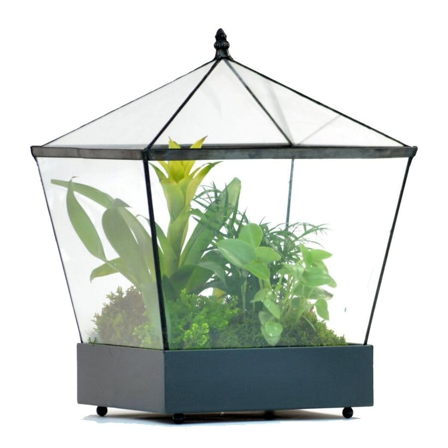 H. Potter 12-in x 16-in Metal Terrarium