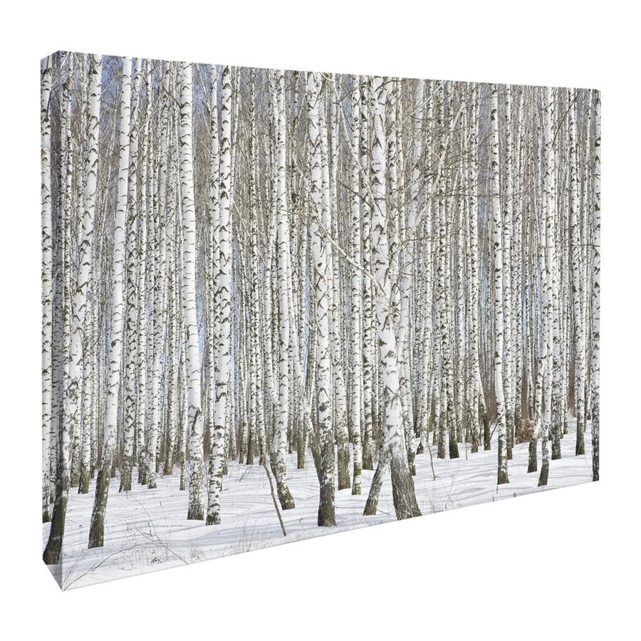 JP London 46-in W x 34-in H Frameless Canvas Snow Birch Trees In Winter Forest Print Wall Art
