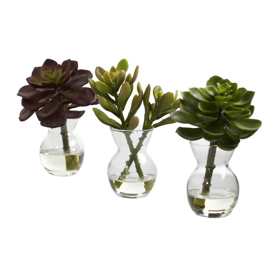 Nearly Natural Set of 3 Succulents in Clear Vases